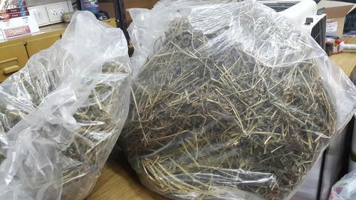 alfalfa en bolsa suelta