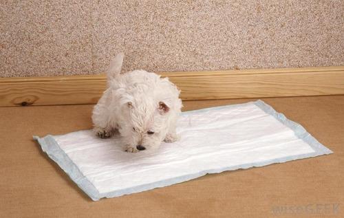 alfombra sanitaria mascotas