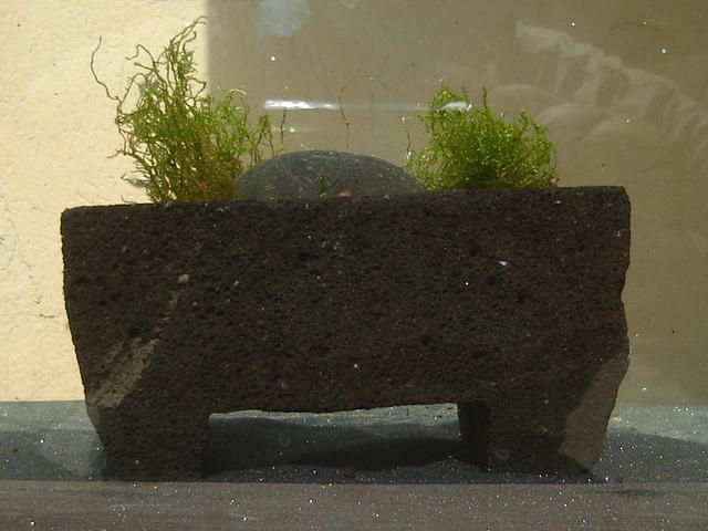 Algas acuarios peces estanques ornamentales musgo plato for Estanques para peces ornamentales