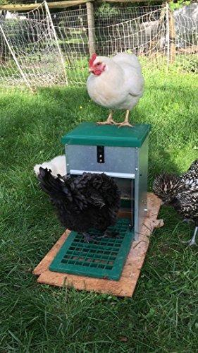 alimentador automático de pedal para pollos y otros aves