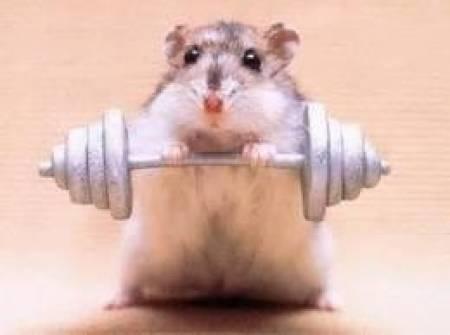 alimento de hamster 5 kilos peletizado premium barratisimo