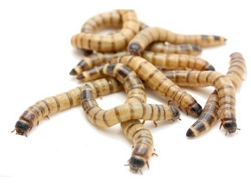 alimento gusanos premium para reptiles tortuga erizo zoomed