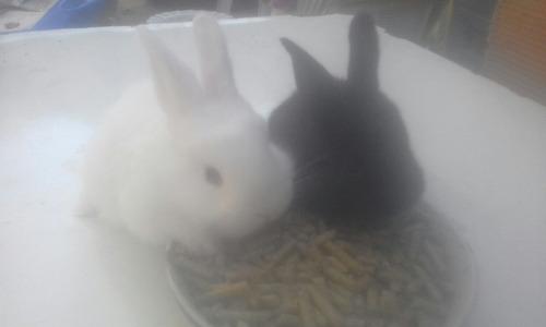 alimento para conejos hoffmann__envio gratis