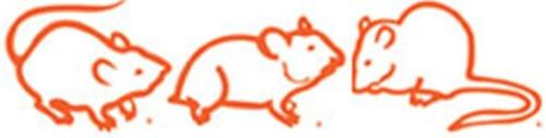 alimento para hamster , ratas y ratones nutricubos 20kg