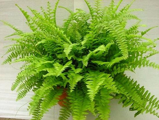 Alimento para helechos palo de agua y plantas verdes for Plantas verdes exterior