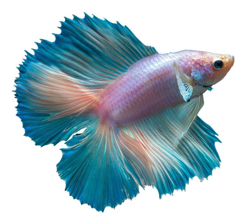 alimento para peces betta nutrafin max color 24gr