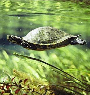 alimento para tortugas nacional 1 kg colores