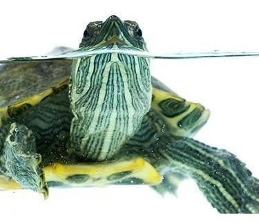 alimento para tortugas nutrafin max tortugas 340gr