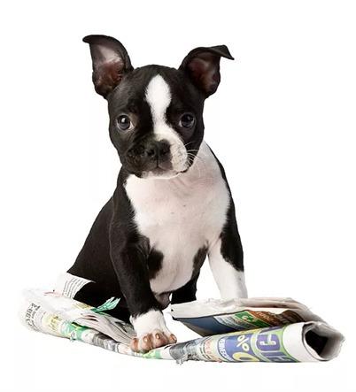 alimento super premium cachorro kirkland 9.1 kg gratis envío