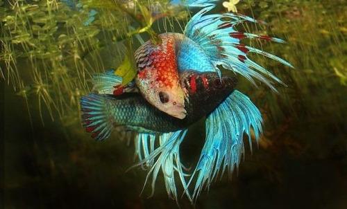 almendro indio grado a, acondicionador de acuario peces