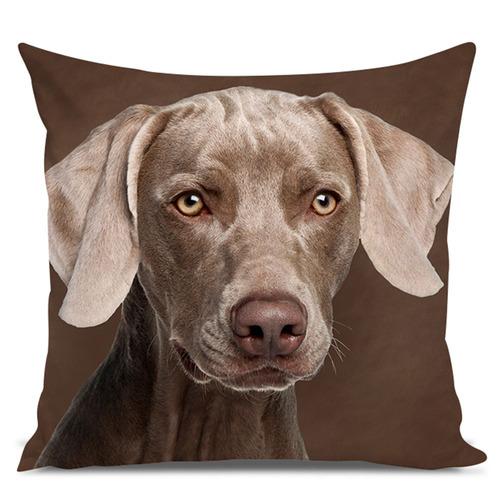 almofada cachorro weimaraner chocolate 45x45cm