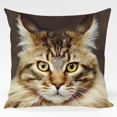 almofada gato maine coon