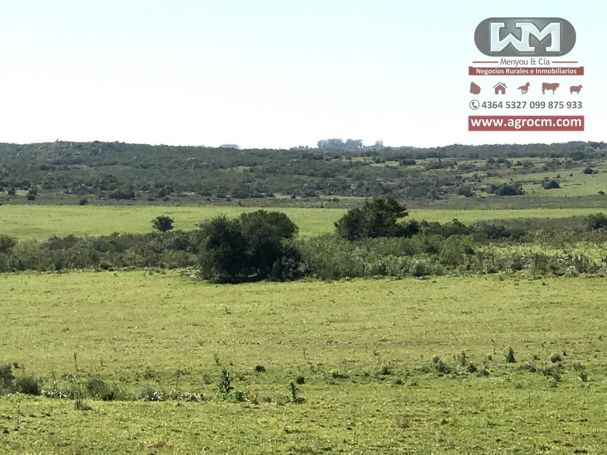 alquiler campo 1300 hectáreas colonia campo ganadero mixto