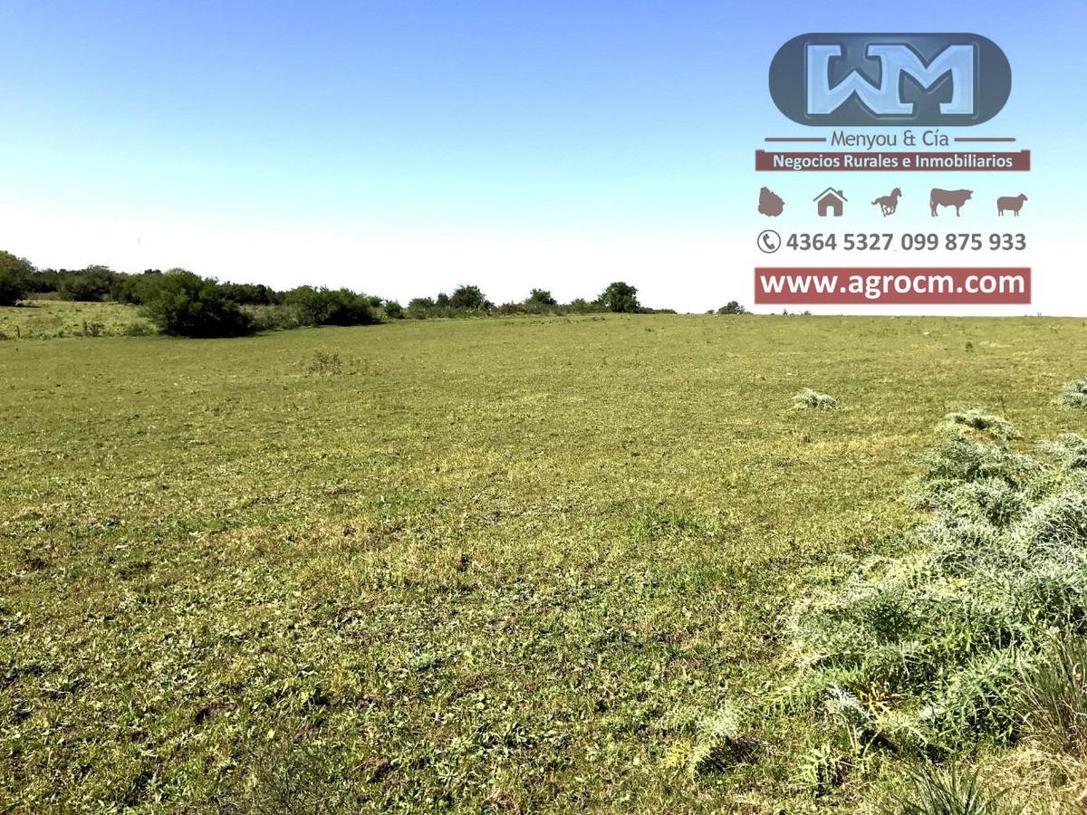alquiler campo campo