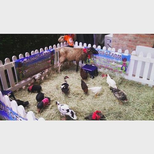 alquiler de pony y granja de contacto para eventos