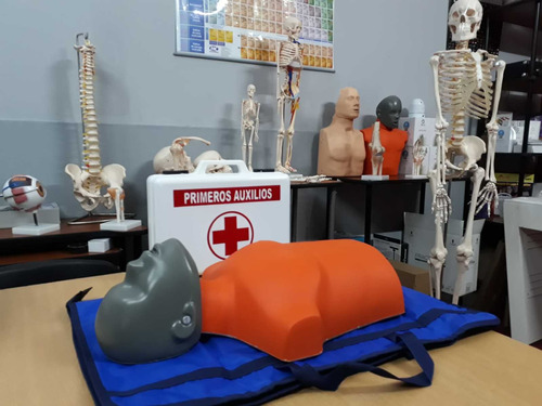 alquiler de torsos de rcp para prácticas masivas