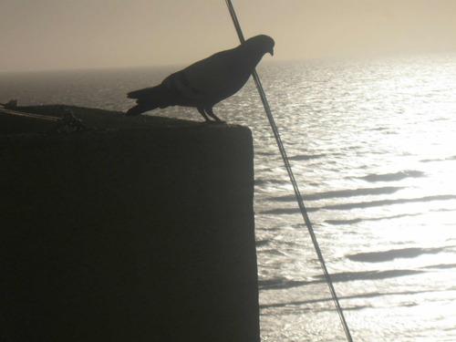 alquiler dpto 1 amb san bernardo. dic feb marzo vista al mar