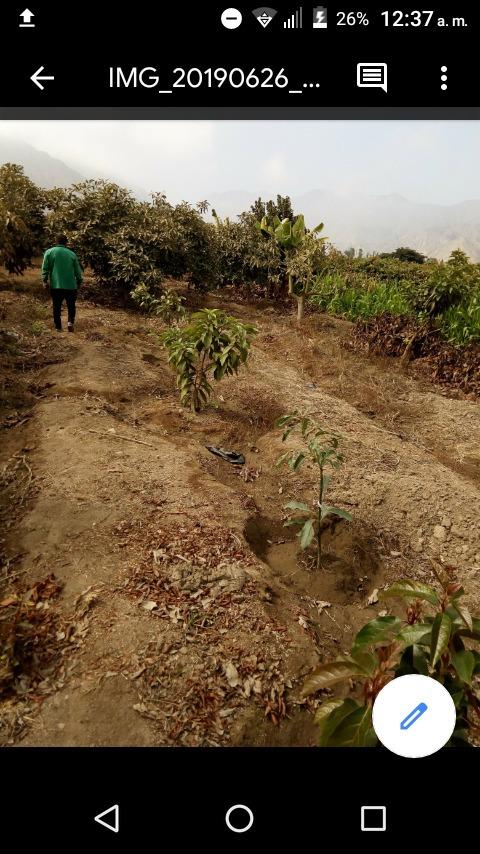 alquiler terreno agricola