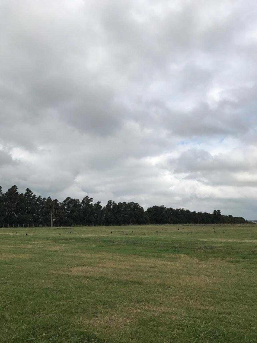 alquilo terreno 3 ha. en melilla próx parque agroalimentario