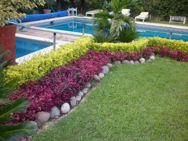 Amaranto planta roja iresine en mercado libre for Proyecto vivero ornamental