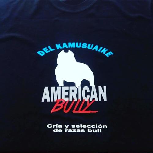 american bully abkc hembra . vendida !!