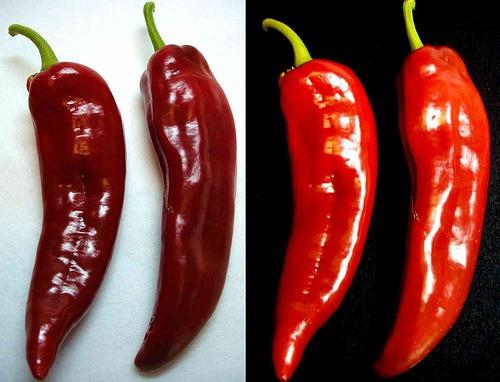 anaheim chili pepper pimenta pimentões sementes para mudas