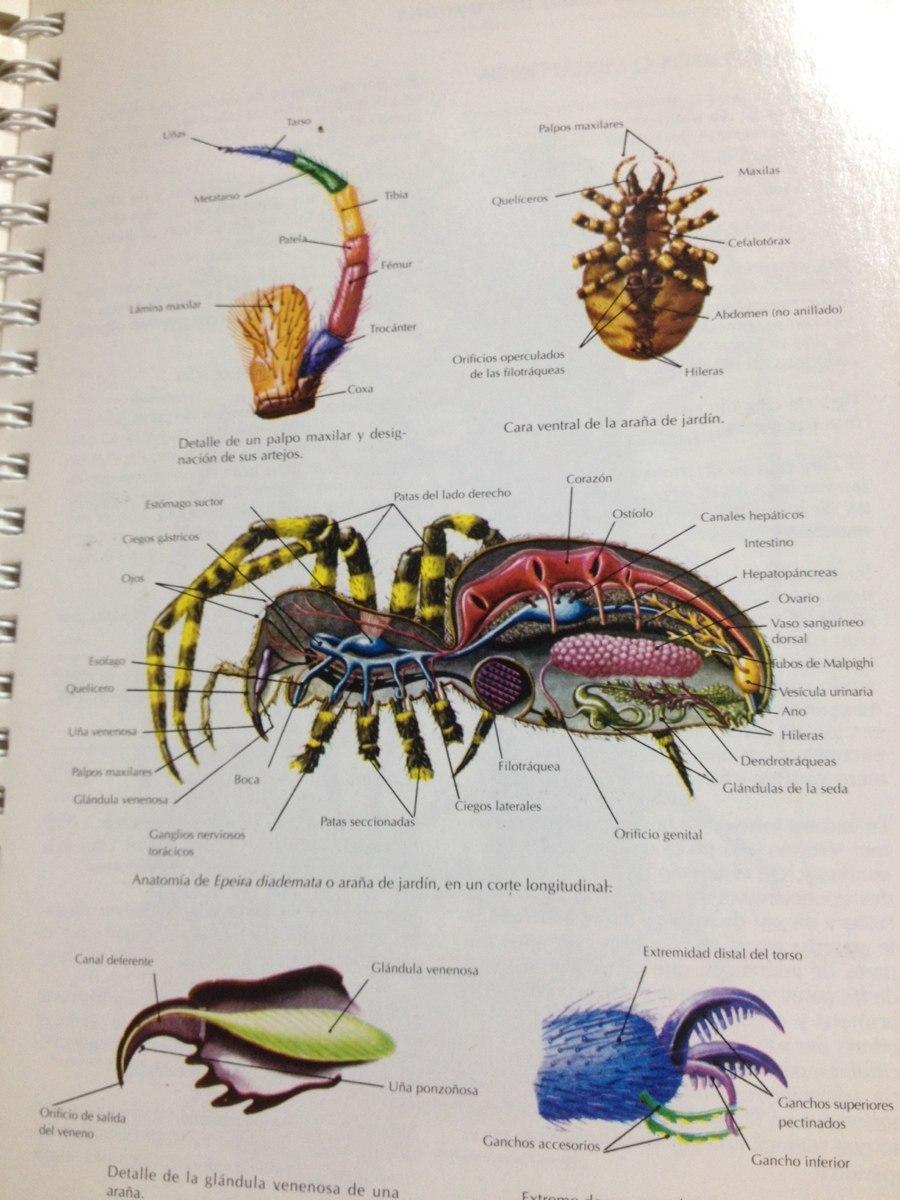Anatomía Animal - Atlas Temático - $ 20.000 en Mercado Libre