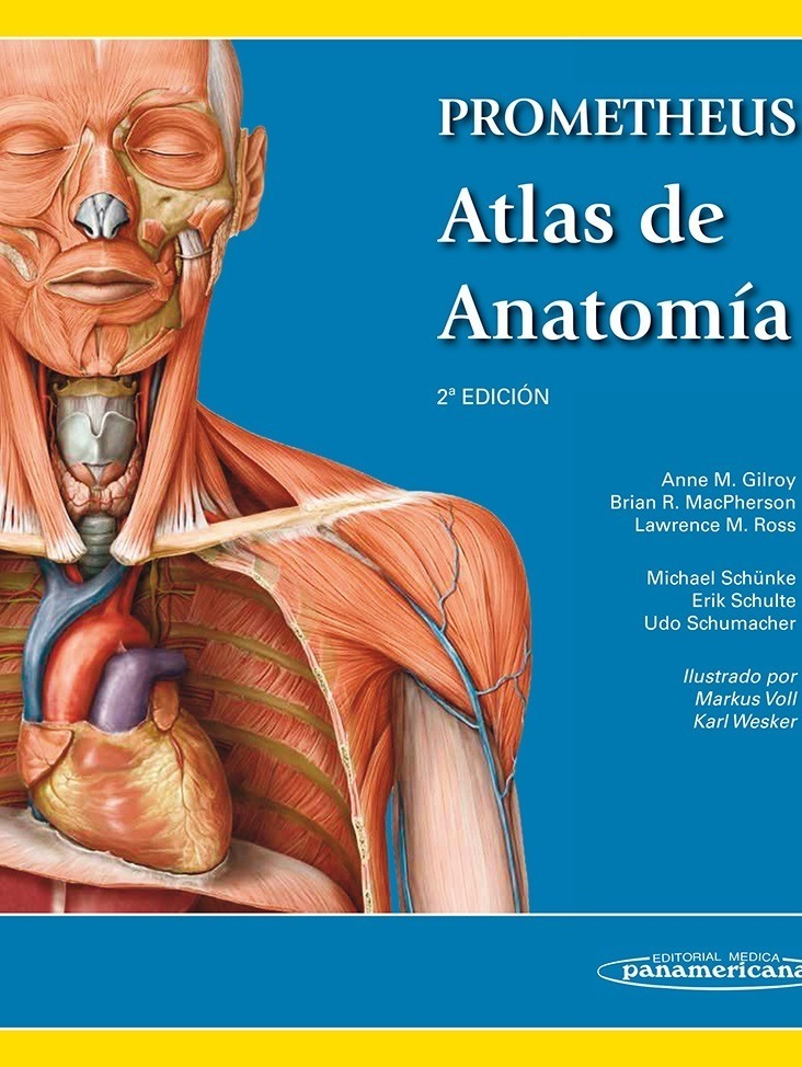 Excepcional Tarjetas De Memoria Flash Anatomía Clínica Fotos ...