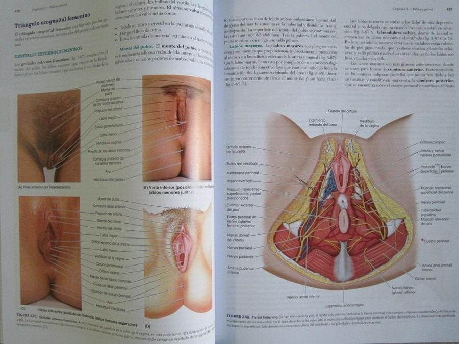 Fantástico Con Orientación Funcional Anatomía Regional Cresta ...