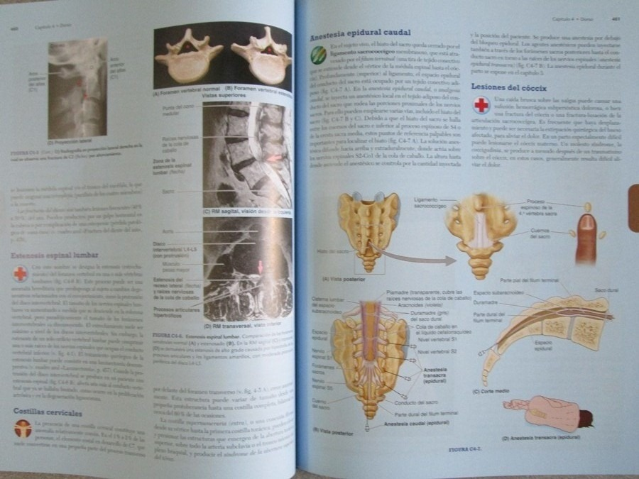 Anatomía Con Orientación Clínica 7a Edición - Moore - $ 255.000 en ...