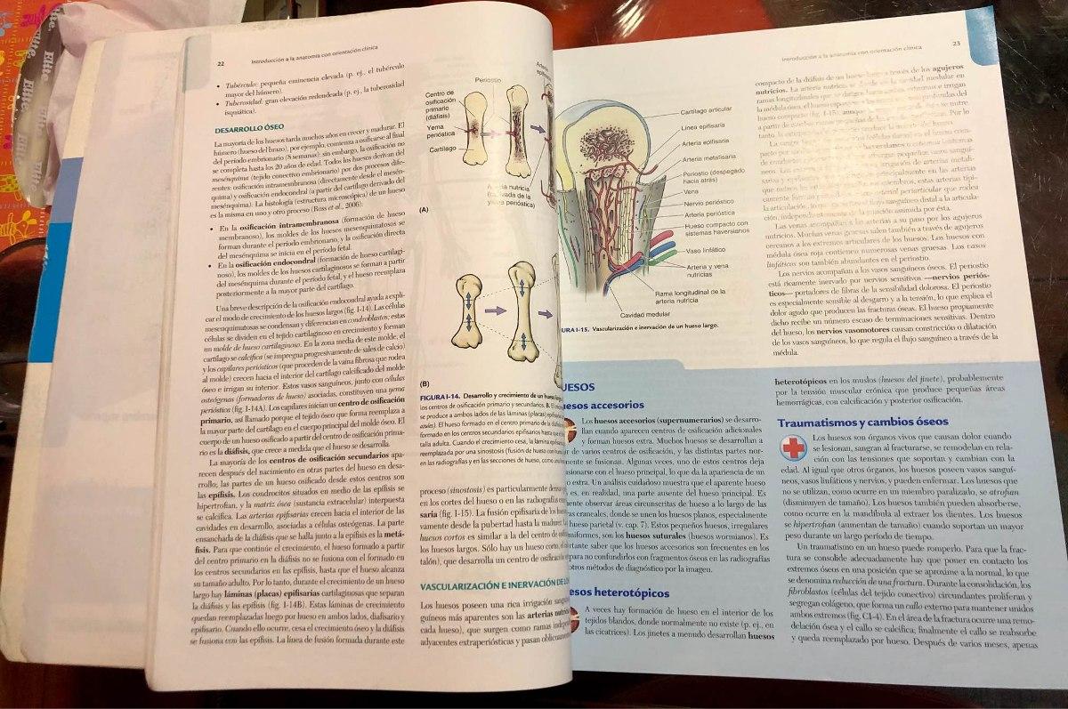 Dorable Orientado Clínicamente Anatomía Por Keith Moore Imágenes ...