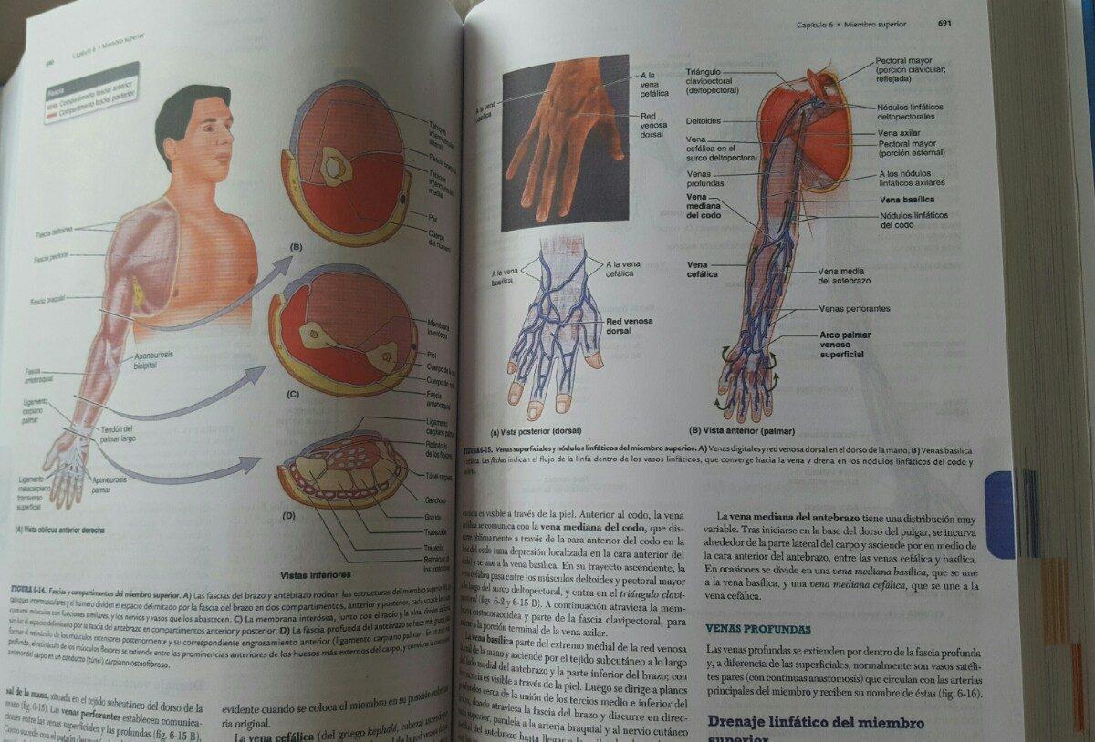 Bonito Anatomía Clínica Por Moore Ilustración - Anatomía de Las ...