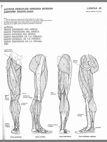 anatomia cromodinamica pdf hd