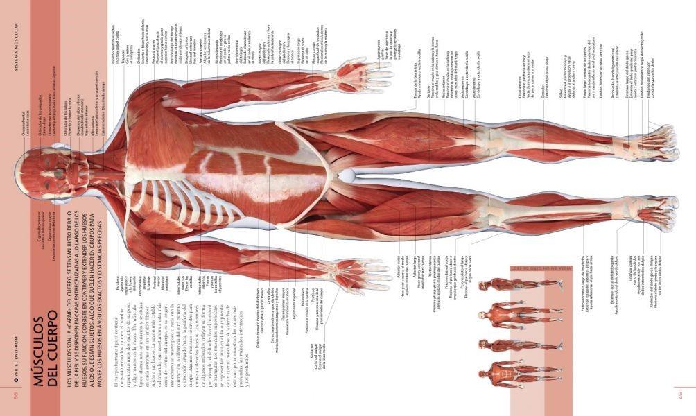 Anatomia Cuerpo Humano Dk - El Comercio - Empastado Original - S/ 40 ...