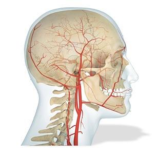 anatomia cuerpo humano dk - el comercio - empastado original