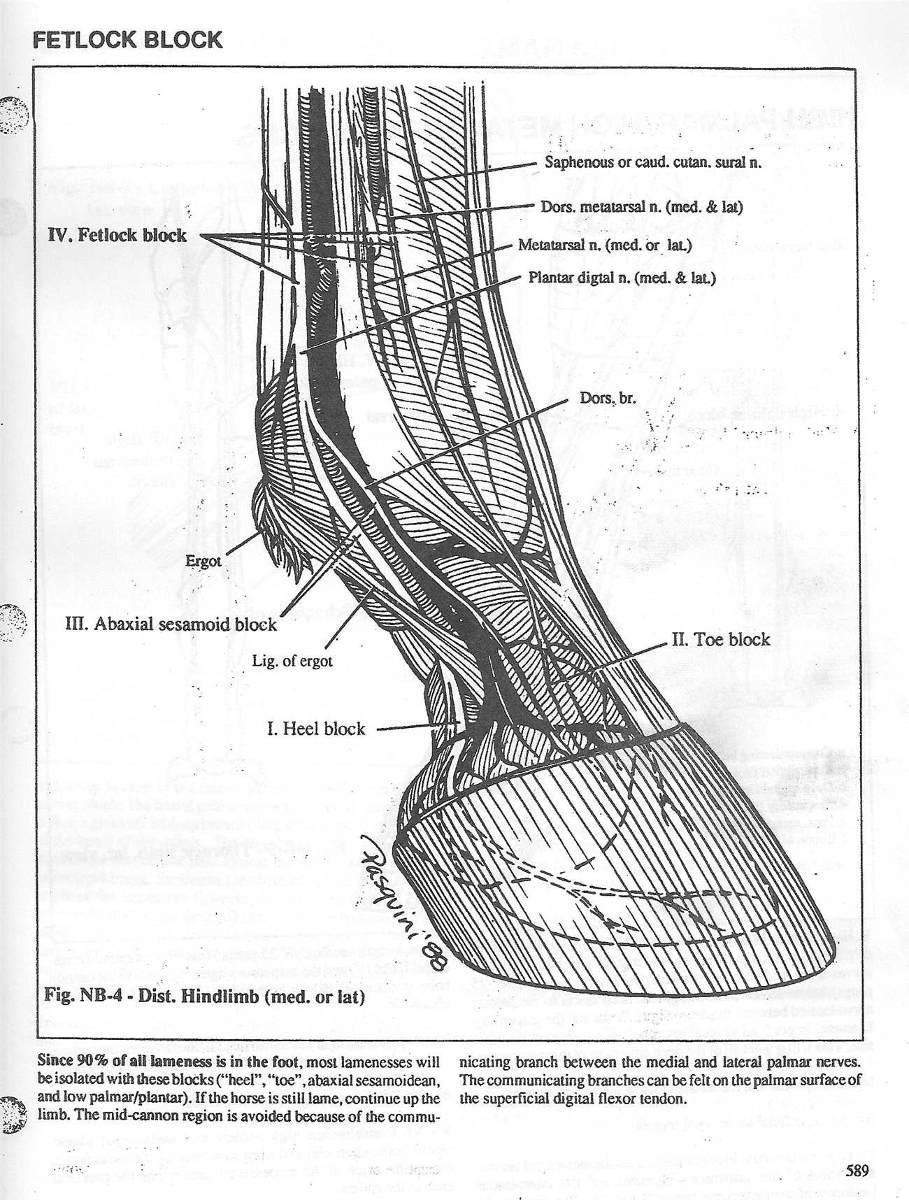 Anatomia De Animales Domesticos, Sistemica Y Regional En Pdf - Bs. 3 ...