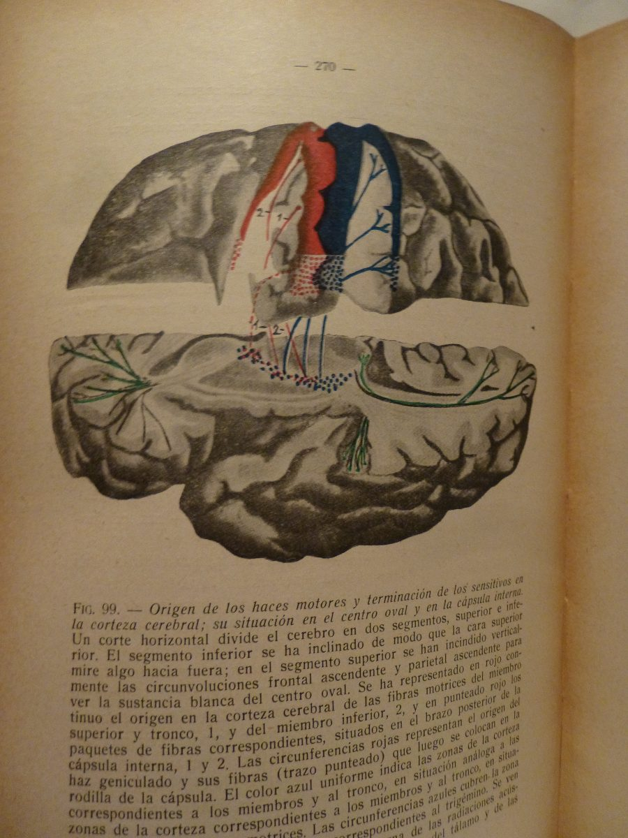 Anatomia De Centros Nerviosos, Prieto,1945 - $ 358,80 en Mercado Libre