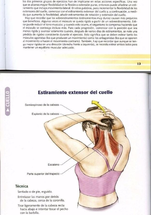 Contemporáneo Erguida La Anatomía Fila Foto - Imágenes de Anatomía ...