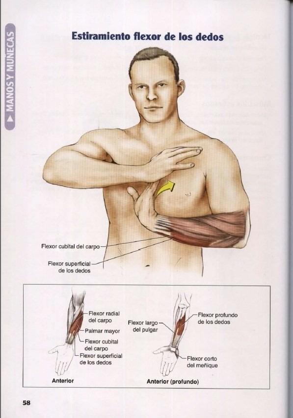 Anatomía De Los Estiramientos- Mejora Flexibilidad Y Fuerza - $ 28 ...
