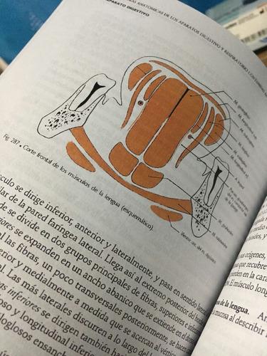 anatomía de rouvier