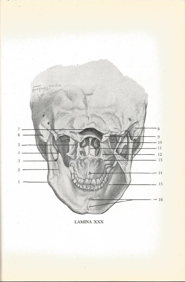 Vistoso Anatomía Dental Woelfel Adorno - Anatomía de Las Imágenesdel ...