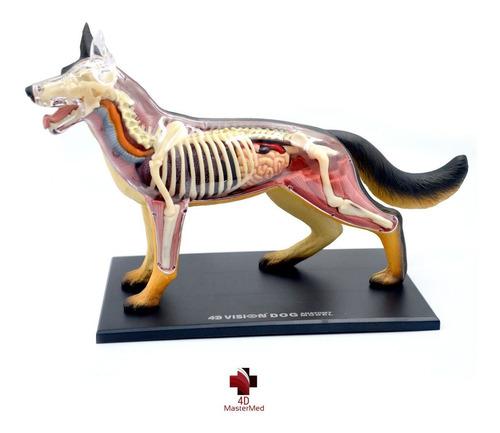 anatomia do cachorro - 4d master med