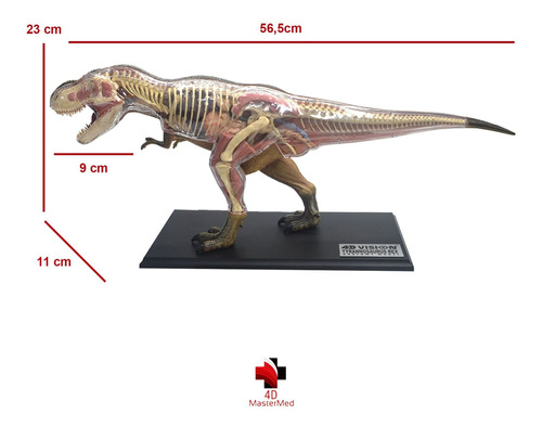 anatomia do dinossauro tiranossauro rex - 4d master