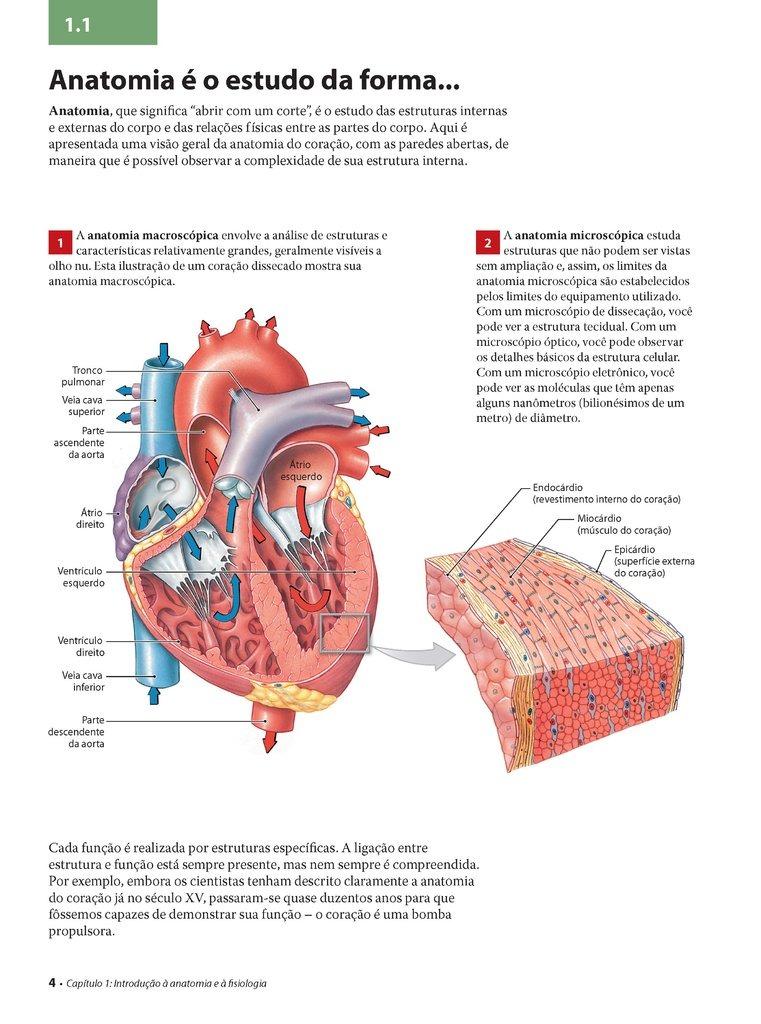 Contemporáneo Become Anatomía Y Fisiología Capítulo 1 Bosquejo ...