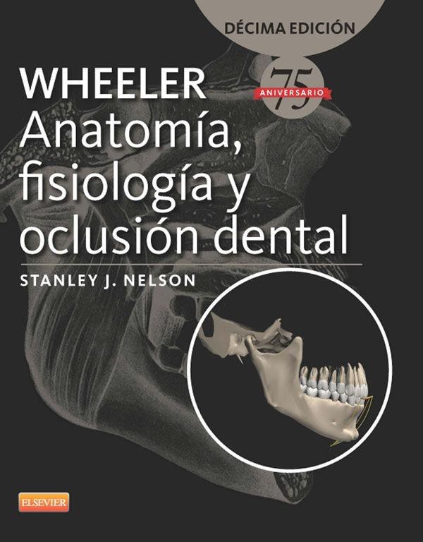Anatomía Fisiología Oclusión Dental 10ª Edición Wheeler Pdf ...
