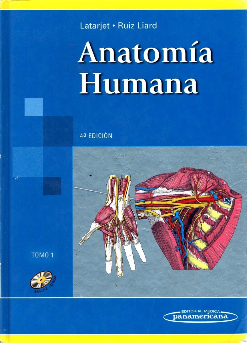 Contemporáneo Anatomía Terapia Sanador Baskar Composición - Anatomía ...