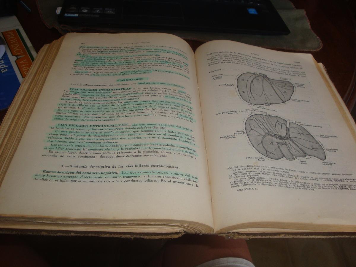 Famoso Anatomía Femenina Hiena Inspiración - Anatomía de Las ...