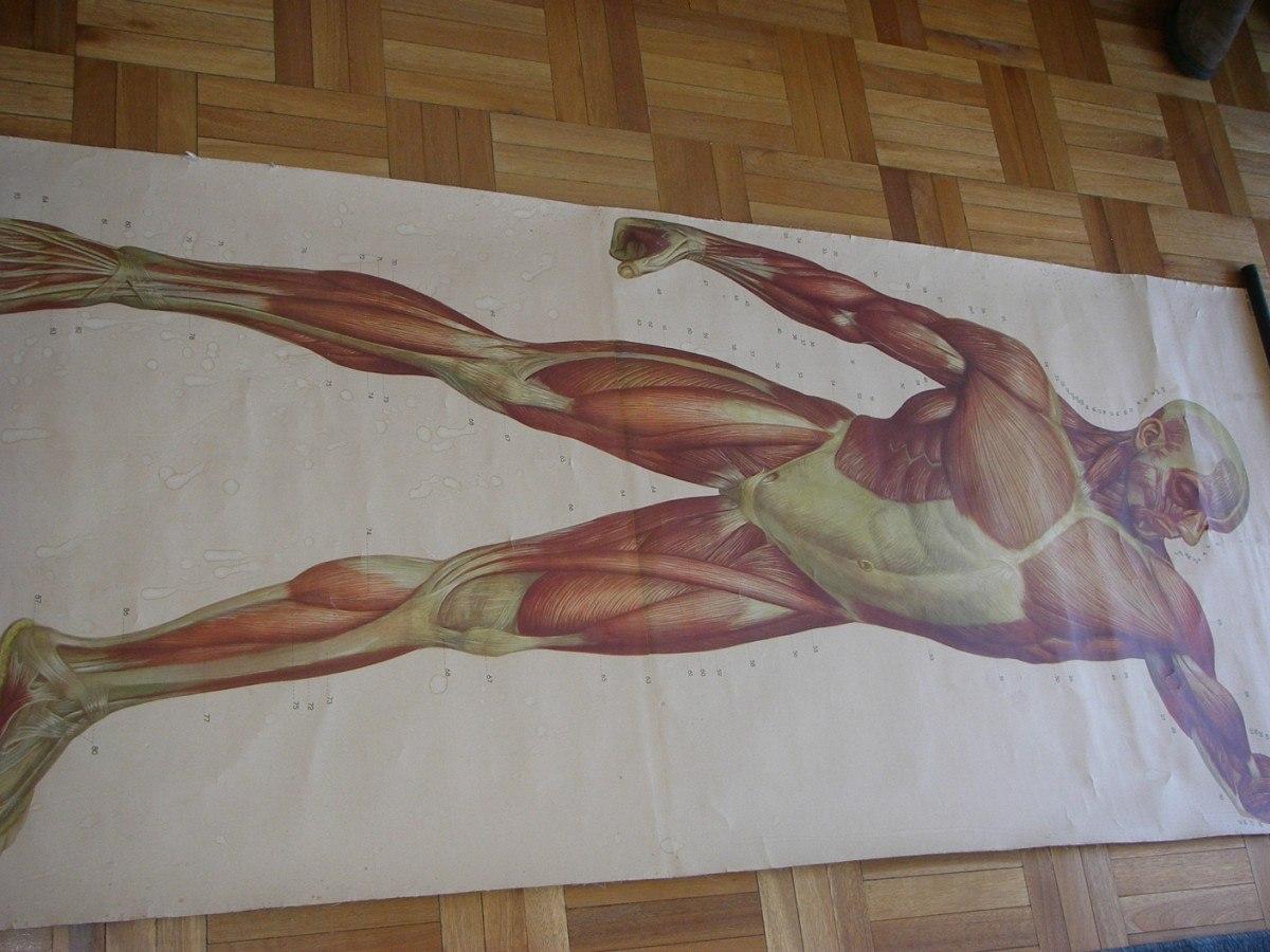 Vistoso Dali Picasso Van Gogh Cartel De La Anatomía Ideas - Anatomía ...