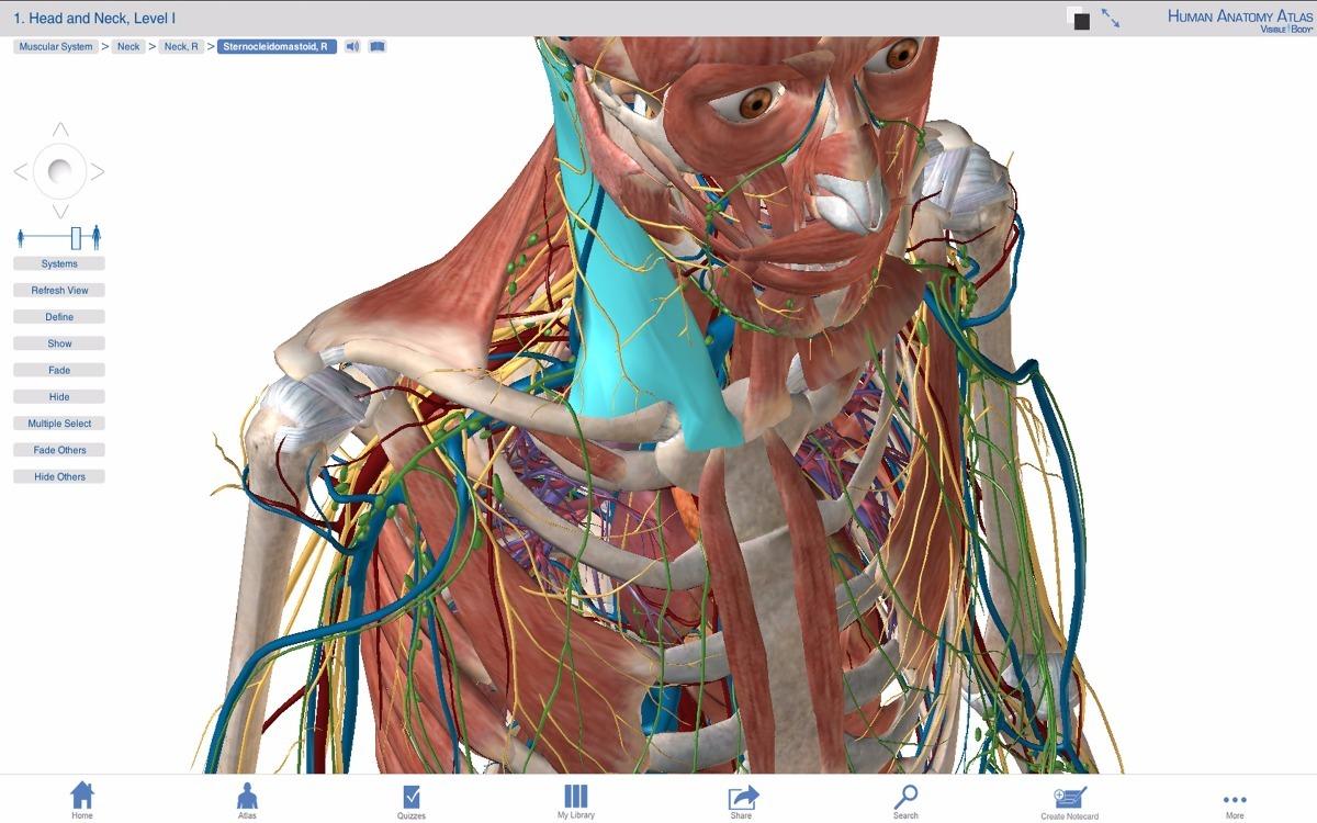 Anatomía Humana Cuerpo 3d Medicina Android Celular Tablet - $ 129.00 ...