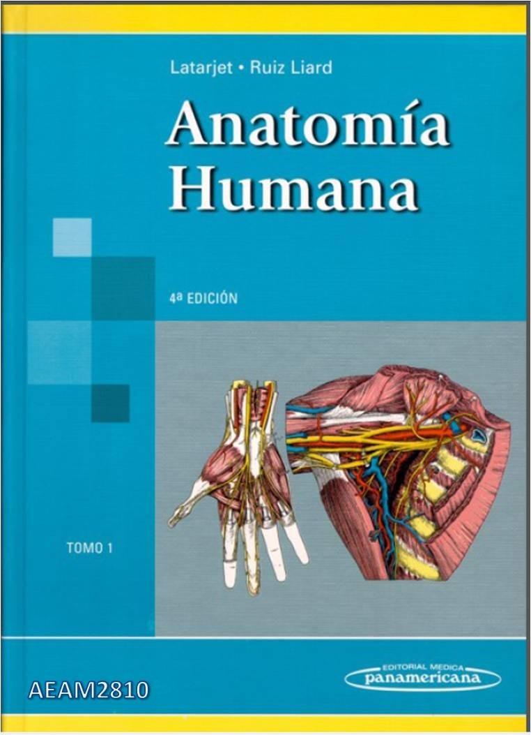Atractivo Descarga Gratuita Anatomía Humana Libro Pdf Ilustración ...
